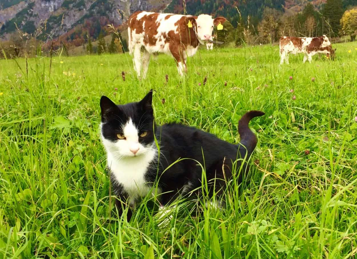 Tiere am Buernhof - Oberlehengut Werfenweng