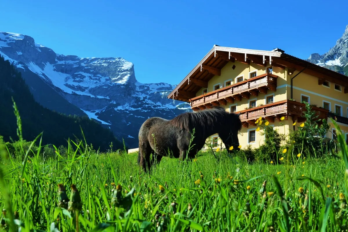 Pony am Bauernhof Oberlehengut Werfenweng