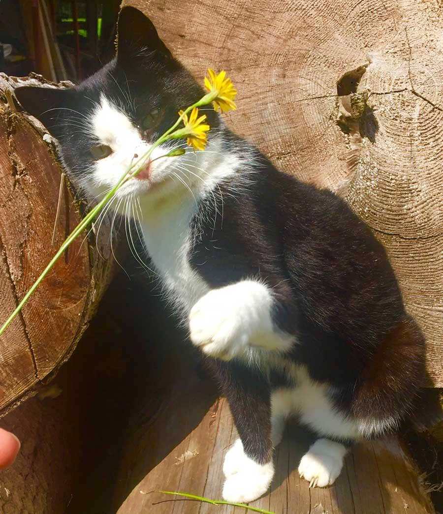 Katze am Bauernhof - Tiere am Oberlehengut in Werfenweng